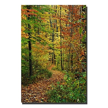 Trademark Fine Art Kurt Shaffer, 'Fall Pathway' Canvas Art 36x48 Inches