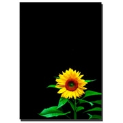 Trademark Fine Art Sunflower by Kurt Shaffer-Gallery Wrapped