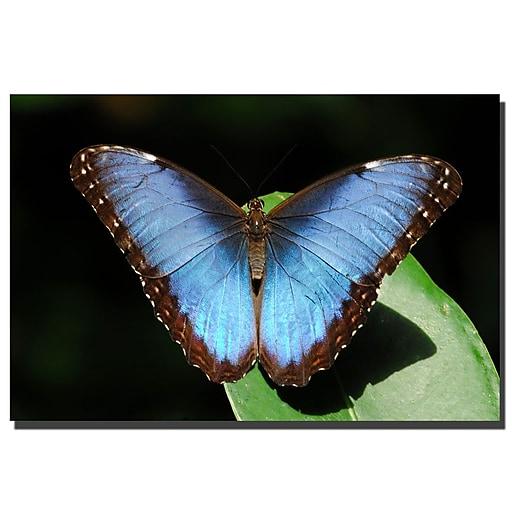 Trademark Fine Art Blue Morpho Butterfly by Kurt Shaffer Canvas Art