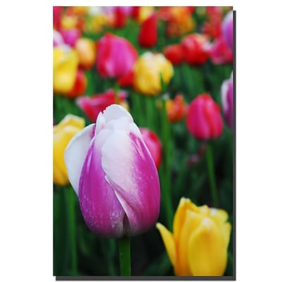 Trademark Fine Art Kurt Shaffer 'In Amont the Tulips' Canvas Art 16x24 Inches