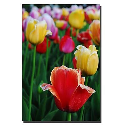 Trademark Fine Art Kurt Shaffer 'In Amont the Tulips II' Canvas Art 30x47 Inches