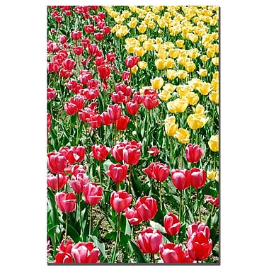 Trademark Fine Art Kurt Shaffer 'Lonely Garden I' Canvas Art