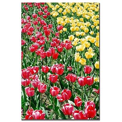 Trademark Fine Art Kurt Shaffer 'Lonely Garden I' Canvas Art