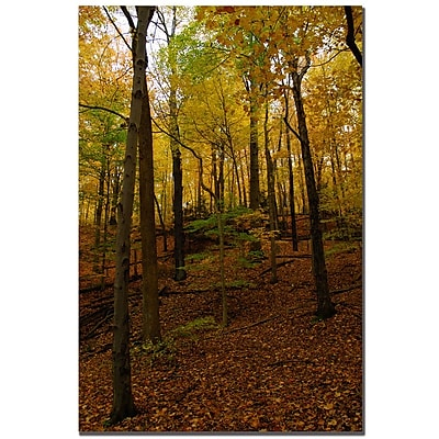 Trademark Fine Art Kurt Shaffer 'Oak Hill' Canvas Art