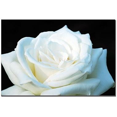 Trademark Fine Art Kurt Shaffer 'White Rose' Canvas Art