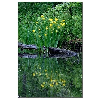 Trademark Fine Art Kurt Shaffer 'Wild Iris Reflections' Canvas Art