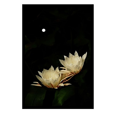 Trademark Fine Art Full Moon Bloom by Kurt Shaffer-26x38