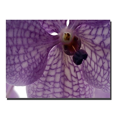 Trademark Fine Art Kurt Shaffer 'Orchid Veins' Canvas Art 18x24 Inches
