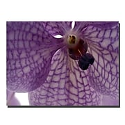 Trademark  Fine  Art Orchid veins by Kurt shaffer-Gallery Wrapped 24x32 Inches