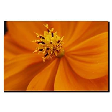 Trademark Fine Art Orange Flower by Kurt Shaffer-Gallery Wrapped Canvas 1 18x24 Inches