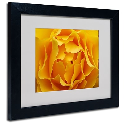 Trademark Fine Art Kurt Shaffer 'Hypnotic Yellow Rose' Matted Art Black Frame 16x20 Inches