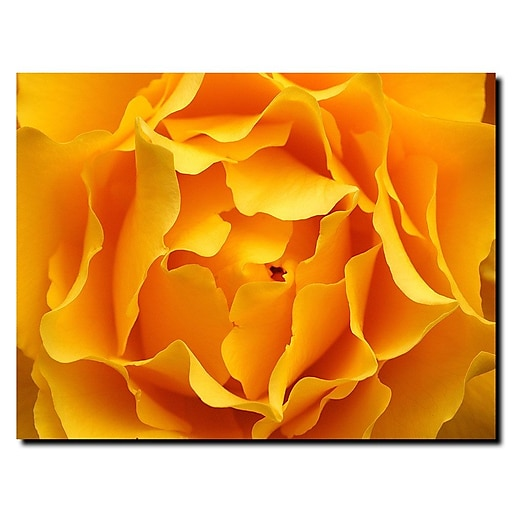 Trademark Fine Art Kurt Shaffer 'Yellow Rose' Canvas Art 24x32 Inches