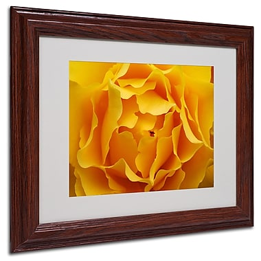 Kurt Shaffer 'Hypnotic Yellow Rose' Matted Framed Art - 16x20 Inches - Wood Frame