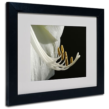 Trademark Fine Art Kurt Shaffer 'Intimate Amaryllis' Matted Art Black Frame 16x20 Inches