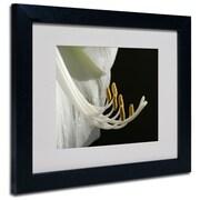 Trademark Fine Art Kurt Shaffer 'Intimate Amaryllis' Matted Art Black Frame 16x20 Inches