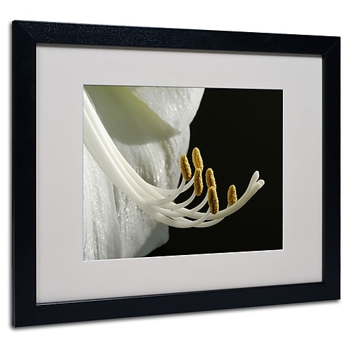 Kurt Shaffer 'Intimate Amaryllis' Matted Framed Art - 11x14 Inches - Wood Frame