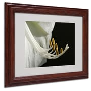 Kurt Shaffer 'Intimate Amaryllis' Matted Framed Art - 16x20 Inches - Wood Frame