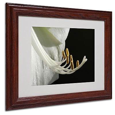 Kurt Shaffer 'Intimate Amaryllis' Matted Framed Art - 16x20 Inches - Wood Frame