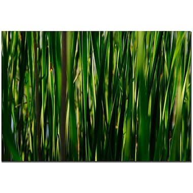 Trademark Fine Art Prairy Grass II by Kurt Shaffer Canvas Ready to Hang