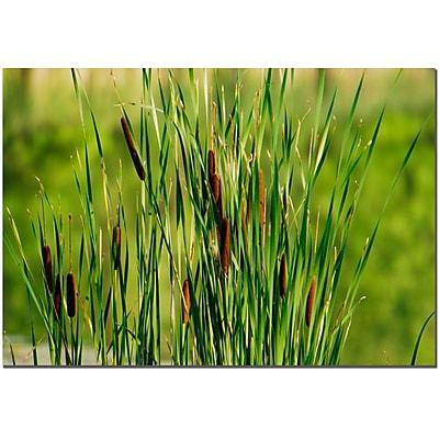 Trademark Fine Art Prairy Grass III by Kurt Shaffer Canvas Ready to Hang