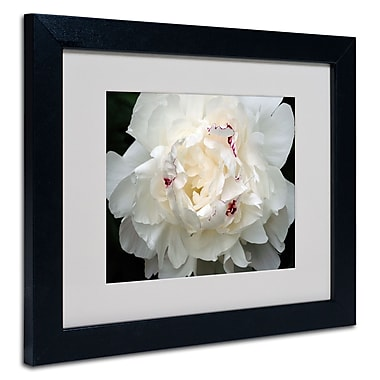 Trademark Fine Art Kurt Shaffer 'Perfect Peony' Matted Art Black Frame 16x20 Inches