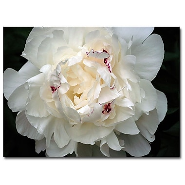 Trademark Fine Art Kurt Shaffer 'Perfect Peony' Canvas Art 14x19 Inches