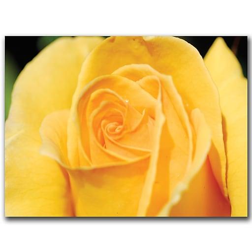 Trademark Fine Art Yellow Rose Close Up by Kurt Shaffer-Ready to hang art 35x47 Inches