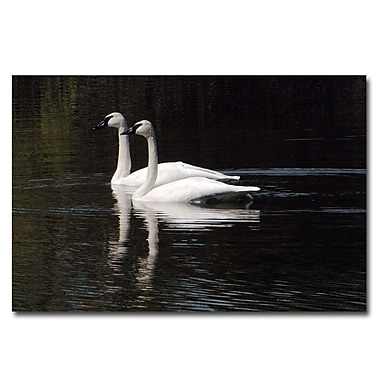 Trademark Fine Art Twin Swans by Kurt Shaffer-Ready to hang Gallery Wrapped 24x32 Inches
