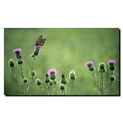 Trademark Fine Art Monarch Thistles by Kurt Shaffer-Ready to hang art 14x19 Inches
