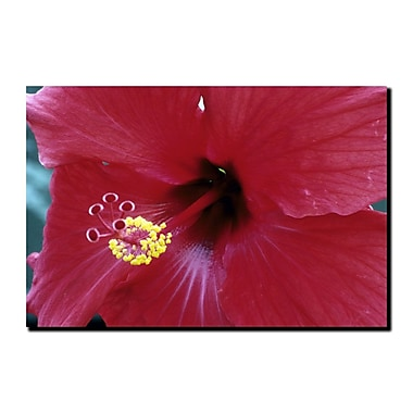Trademark Fine Art Into The Hibiscus by Kurt Shaffer-Gallery Wrapped 24x32 Inches
