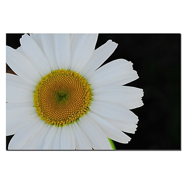 Trademark Fine Art Daisies on Black II by Kurt Shaffer-Gallery Wrapped