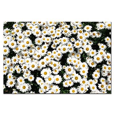 Trademark Fine Art Hydrangea Closeup by Kurt Shaffer-Gallery Wrapped
