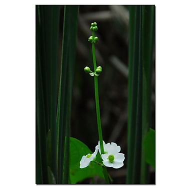Trademark Fine Art Kurt Shaffer 'Hidden WIldflower' Canvas Art 22x32 Inches