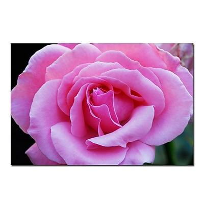 Trademark Fine Art Pink and Beautiful-Kurt Shaffer-Gallery Wrapped , KS326-C1624GG