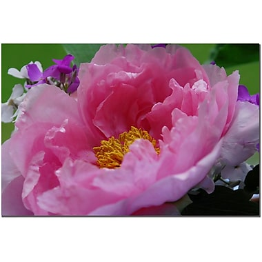 Trademark Fine Art Tree Peonie by Kurt Shaffer Canvas Art Ready to Hang