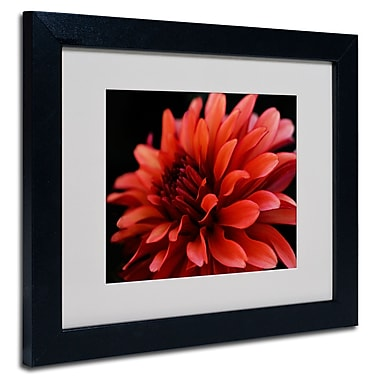 Trademark Fine Art Kurt Shaffer 'Red Dahlia' Matted Art Black Frame 16x20 Inches