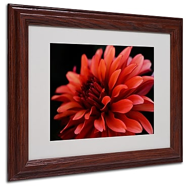 Kurt Shaffer 'Red Dahlia' Matted Framed Art - 16x20 Inches - Wood Frame