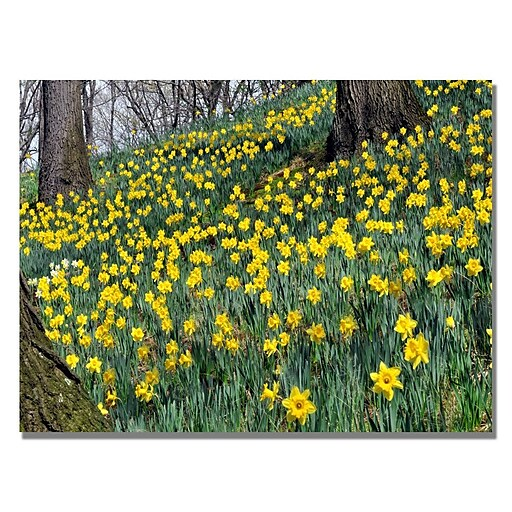 Trademark Fine Art Kurt Shaffer 'Hillside of Daffodils' Canvas Art 18x24 Inches