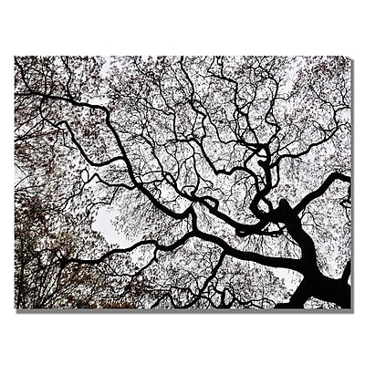 Trademark Fine Art Kurt Shaffer 'Japanese Maple Spring Abstract II' Canvas Art 22x32 Inches