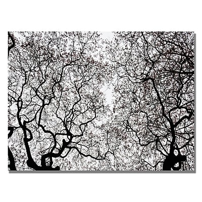 Trademark Fine Art Kurt Shaffer 'Japanese Maple Spring Abstract' Canvas Art 22x32 Inches