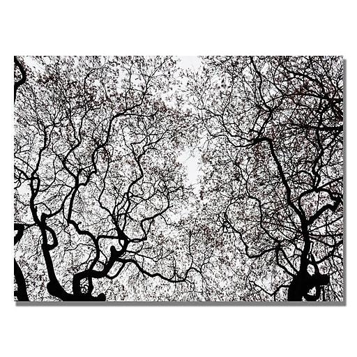 Trademark Fine Art Kurt Shaffer 'Japanese Maple Spring Abstract' Canvas Art 22x32 Inches