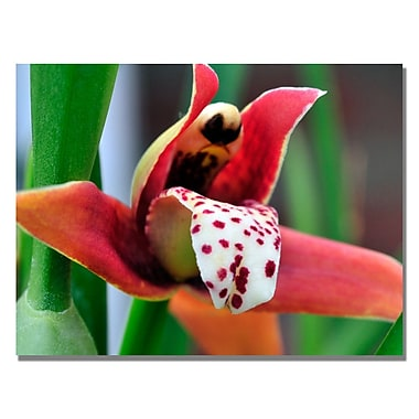 Trademark Fine Art Kurt Shaffer 'Little Red Orchid' Canvas Art 24x32 Inches