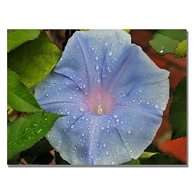Trademark Fine Art Kurt Shaffer 'Morning Glory Rain Drops' Canvas Art 18x24 Inches