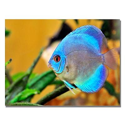 Trademark Fine Art Kurt Shaffer 'One Blue Fish' Canvas Art 18x24 Inches