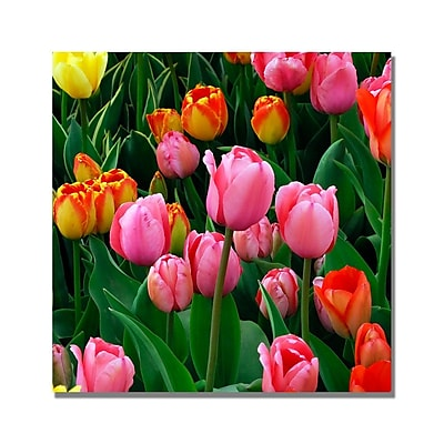 Trademark Fine Art Kurt Shaffer 'Pink in the Middle Tulips' Canvas Art 18x18 Inches