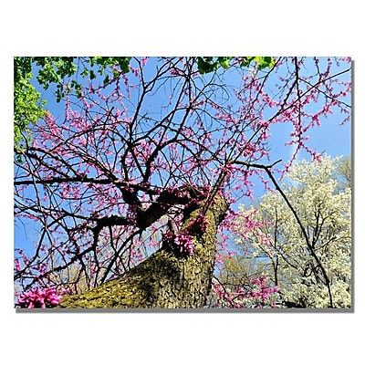 Trademark Fine Art Kurt Shaffer 'Spring up the Redbud' Canvas Art 22x32 Inches
