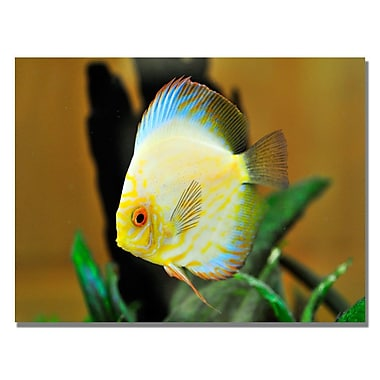 Trademark Fine Art Kurt Shaffer 'Tropical Fish' Canvas Art 30x47 Inches