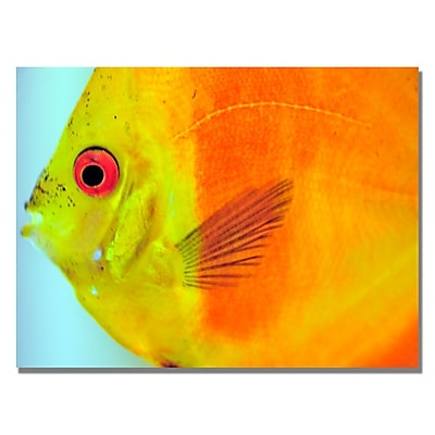 Trademark Fine Art Kurt Shaffer 'Tropical Fish Close-up' Canvas Art 30x47 Inches