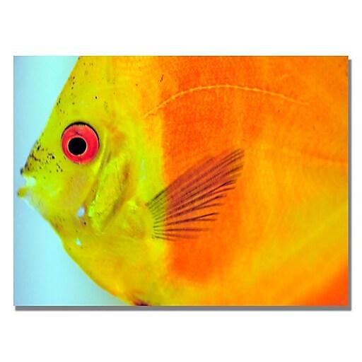 Trademark Fine Art Kurt Shaffer 'Tropical Fish Close-up' Canvas Art 18x24 Inches