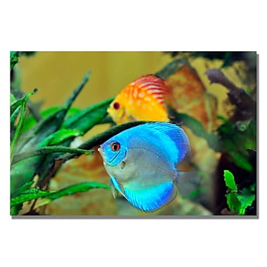 Trademark Fine Art Kurt Shaffer 'Two Tropical Fish II' Canvas Art 30x47 Inches